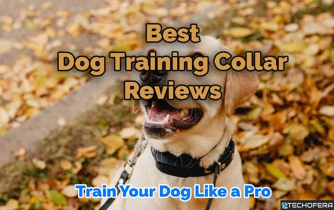 best dog training collar reviews