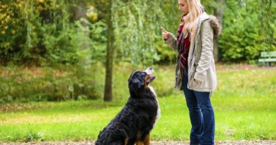 7 basic commands for dogs